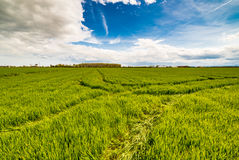 Wheel tracks in cultivated fields Stock Photo