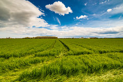 Wheel tracks in cultivated fields Stock Image