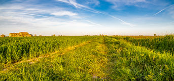 Wheel tracks in cultivated fields Stock Images