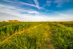 Wheel tracks in cultivated fields Stock Photography