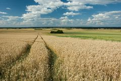 Wheel tracks in the field and a copse, horizon and clouds in the. Wheel tracks in the field, forest on the horizon and white clouds in the sky stock photography