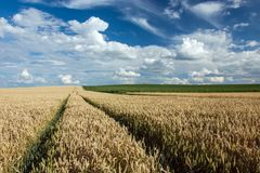 Wheel tracks on the field. Wheel tracks in the field, horizon and clouds on a blue sky stock image