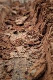 Wheel tracks on the soil. Stock Image