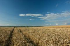 Wheel tracks in a wheat field, horizon and blue sky. Wheel tracks in a wheat field and clouds on a blue sky stock photo