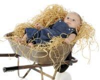 Wheelbarrel Baby Stock Image