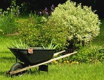Wheelbarrel and garden. Wheelbarrel near a garden and a rose bush Stock Image