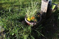 Wheelbarrel-Pflanzer ha stockfotografie