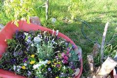 Wheelbarrel-Pflanzer 3 stockbilder