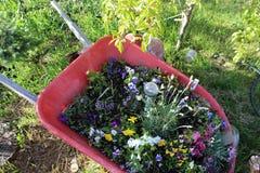 Wheelbarrel-Pflanzer s1 lizenzfreies stockbild