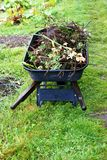 Wheelbarrow. A wheelbarrow loaded with twigs and plants royalty free stock photography