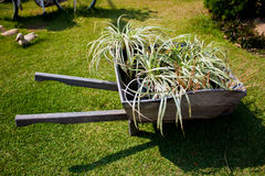 The Wheelbarrow. Carry some plant Royalty Free Stock Images
