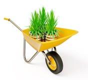 Wheelbarrow. Yellow wheelbarrow with plant, isolated on a white Royalty Free Stock Image
