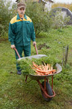 Wheelbarrow with carrot Royalty Free Stock Images