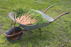 Wheelbarrow with carrot Stock Photos