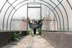 The wheelbarrow, complete with a set of old dirty garden tools under the roof in the greenhouse. Greenhouse. old dirty garden tools among the beds on the cart stock photography