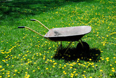 Wheelbarrow with Dandelions Royalty Free Stock Photo