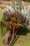 Wheelbarrow decorated with flowers in the garden. Royalty Free Stock Image