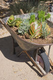 Wheelbarrow Desert Flora Stock Images