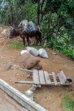 Wheelbarrow and a donkey of a roadside seller along La Farola road between Guantanamo and Baracoa, Cu royalty free stock photography