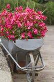 Wheelbarrow with flowers Stock Photo