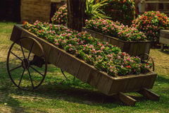 Wheelbarrow with flowers Stock Images