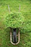 Wheelbarrow with fresh green grass Royalty Free Stock Photo