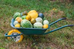 Wheelbarrow with freshly harvested crop Royalty Free Stock Photos