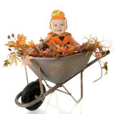 Wheelbarrow Full of Baby stock photography