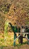 Wheelbarrow full of brambles Royalty Free Stock Image