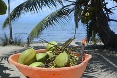 Wheelbarrow full of coconuts Royalty Free Stock Photography