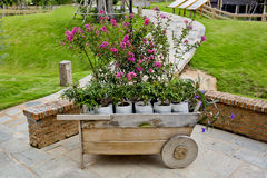 Wheelbarrow full of colorful flowers Stock Photo