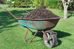 Wheelbarrow full of compost on green lawn in garden. stock image