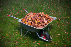 Wheelbarrow full of dried leaves Royalty Free Stock Photos