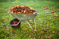 Wheelbarrow full of dried leaves Stock Photos