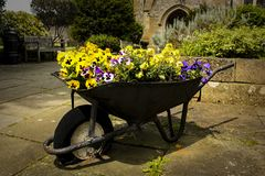 Wheelbarrow Full of Flowers in a garden royalty free stock images