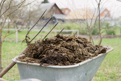 Wheelbarrow full of manure royalty free stock photos