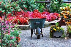 Wheelbarrow in garden. Wheelbarrow in the middle of a beautiful colourful garden Stock Photos