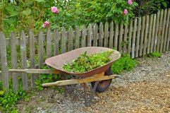 Wheelbarrow in garden Royalty Free Stock Photography