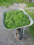 Wheelbarrow of Grass Stock Image