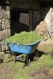 Wheelbarrow with grass Stock Image