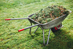Wheelbarrow with grass on green lawn background. Closeup view Royalty Free Stock Photo