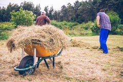 Wheelbarrow with hay and men working on field. Closeup of yellow wheelbarrow full of dry hay and men raking on the field Royalty Free Stock Photography