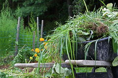 A wheelbarrow laden with garden weeds. A wheelbarrow full of unwanted weeds sitting next to the garden that was weeded Stock Photography