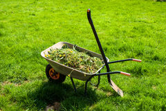 Wheelbarrow on lawn. Wheelbarrow filled with grass in garden Stock Images
