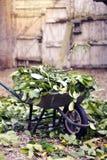 Wheelbarrow pełno liść zieleni ogród Plenerowy obrazy royalty free