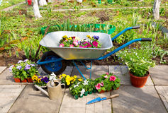 Wheelbarrow with potted flowers and garden tools Royalty Free Stock Images