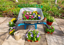 Wheelbarrow with potted flowers and garden tools Stock Photo