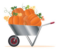 Wheelbarrow with pumpkins Royalty Free Stock Images