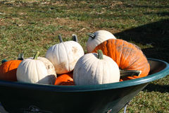 Wheelbarrow of pumpkins Stock Photos