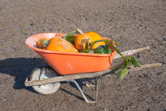 Wheelbarrow of Pumpkins Royalty Free Stock Photography
